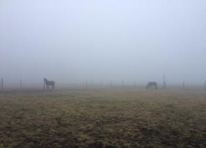 winterweide_nebel
