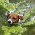Emmi im Dressur-Teich